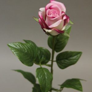 116070 rose (2)