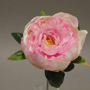 1415948 rose