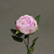 118135 rose