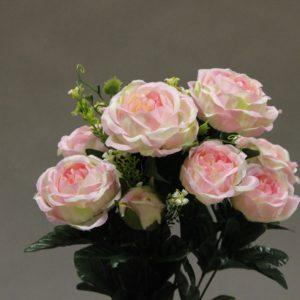 1418095 rose