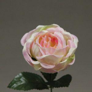 1418096 rose