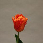 CX004 orange