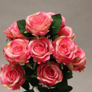 YM003 rose