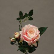 YM010 rose
