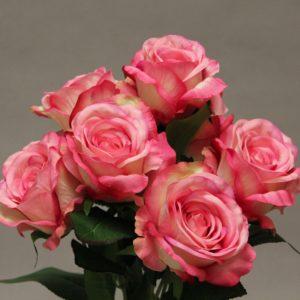 YM016 rose