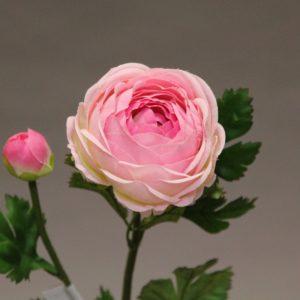 118855 rose