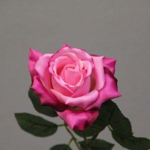 119510 rose