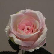 1418815 Rose