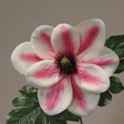 1689361 rose