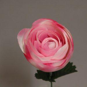 1689938 rose
